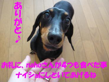 P1070660-2.jpg
