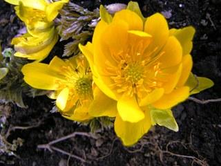 2008-03-18fukujyusou.jpg