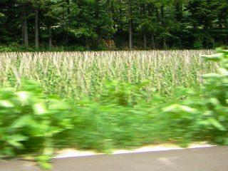2008-07-05(s)soubetu.jpg