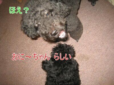 20080729b.jpg