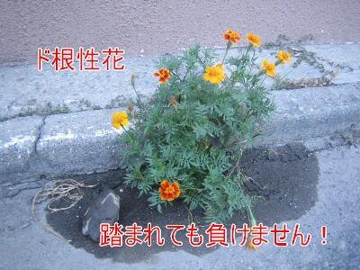 20080802a.jpg