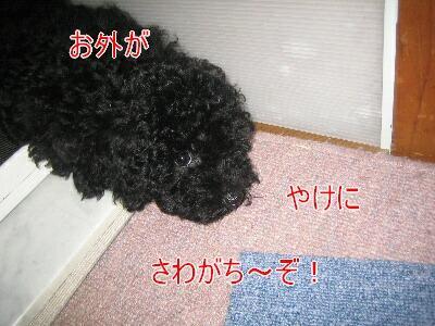 20080804c.jpg