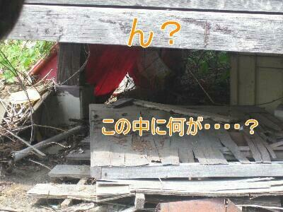 20080804d_20080805134355.jpg