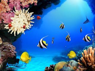 熱帯魚シミュレータ
