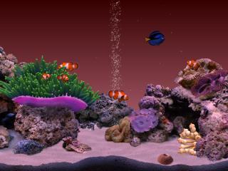 Digifish Clownfish