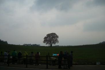 一本桜と見る人