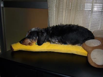 もしかして・・・ママの枕を横取り06