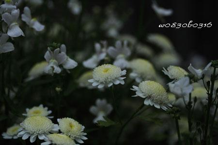 080503_22.jpg
