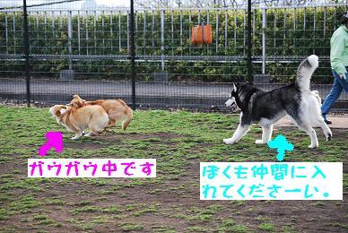 080323blog7.jpg