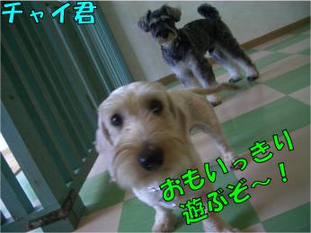 CIMG0339 (1)