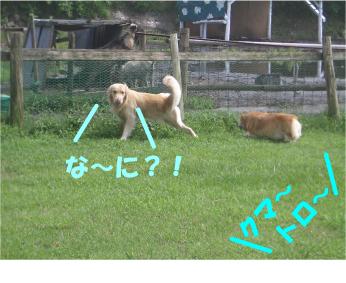 CIMG0151.jpg