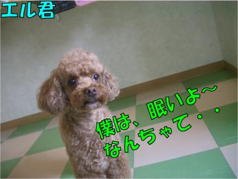 CIMG0338.jpg