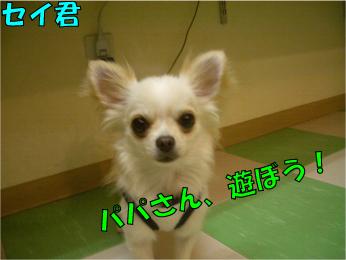 CIMG0348.jpg