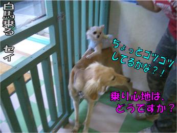 CIMG0411.jpg