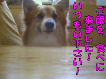 CIMG0770.jpg