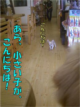 CIMG0778.jpg