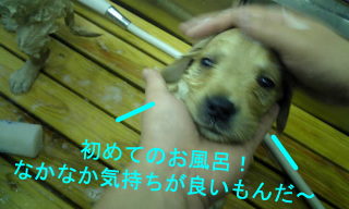 Image098.jpg