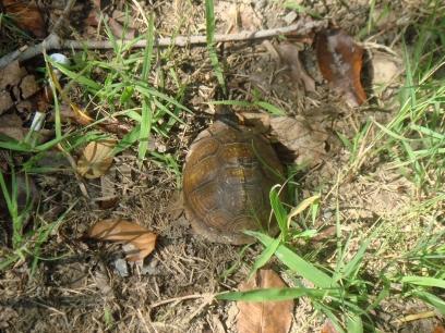 tortois.jpg