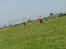 どうやらオレンジ色の訓練士とおぼしき人が若手&シェパードを指導している模様