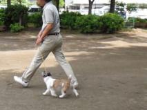 後の足の蹴り上げが強いので、速度があり、前の足はより前方まで伸びて歩幅は広くなる