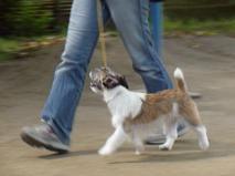 犬の背中が伸びきって、後肢の踏み込みが浅い