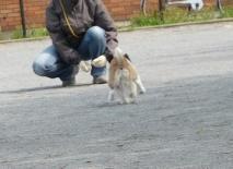 腕は前に出さず、犬に最後まで持ってこさせる