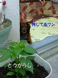 20080505NO2.jpg