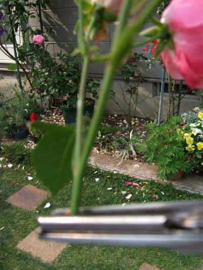 hasami0001_convert_20080523155027.jpg