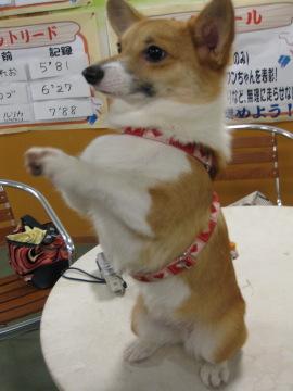 くだちゃい~☆