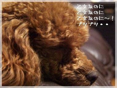 08kattosinai5.jpg