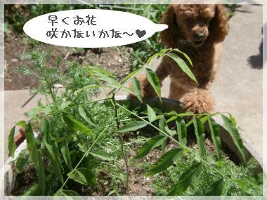 08syokubutu1.jpg