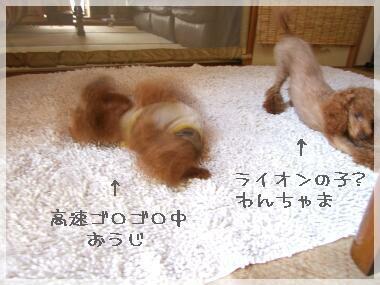 08yasumi-1.jpg