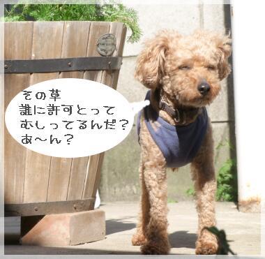 08yasumi4.jpg
