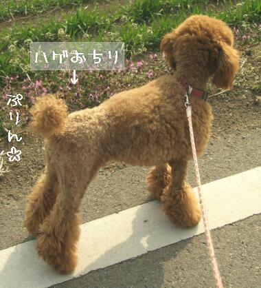 kubiwa-r.jpg