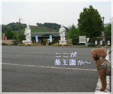 yakuouen1.jpg