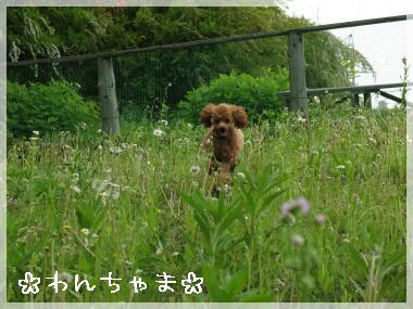 yakuouen6.jpg