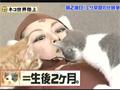 【鳥居みゆき】 うぇぶたま3 ネコブームに乗っかろう!(2/3) バナナマン ケンコバ