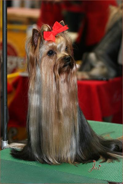 IMG_6342 Nagoya Dogshow 600-400
