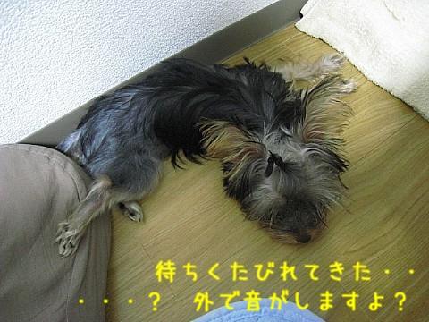 IMG_4850.jpg