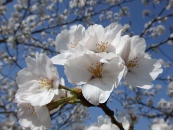 温泉之旅 白花花