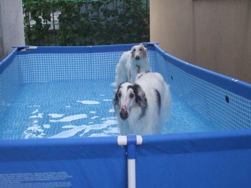 去年のプール