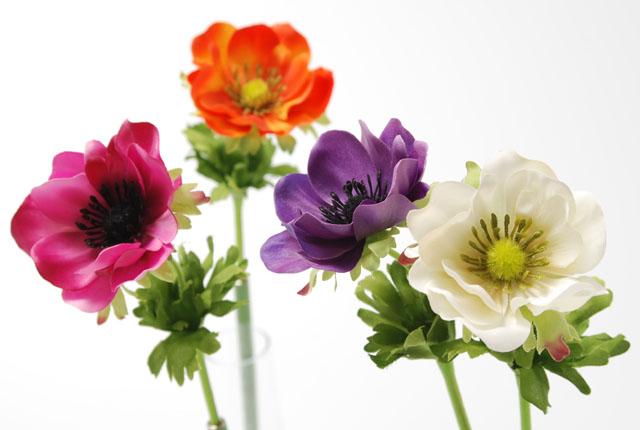 anemone-3.jpg