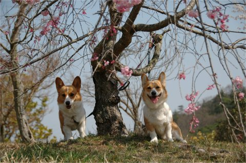 枝垂桜をバックに・・・