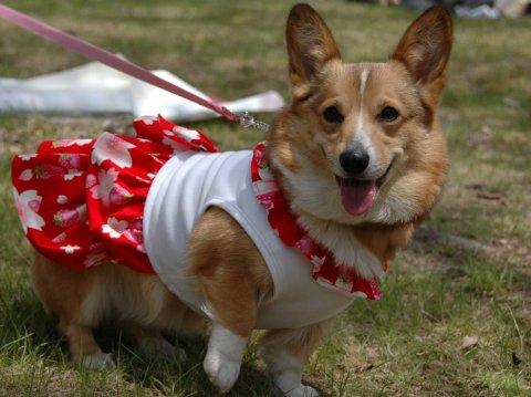 レミちちさんが、スマイル犬と命名。