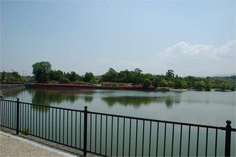 ツツジで彩られた蜻蛉池公園