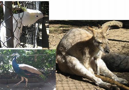 ssss-animals.jpg