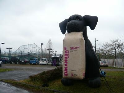 ユーカヌバ犬