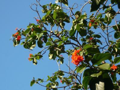 赤い花と蒼い空