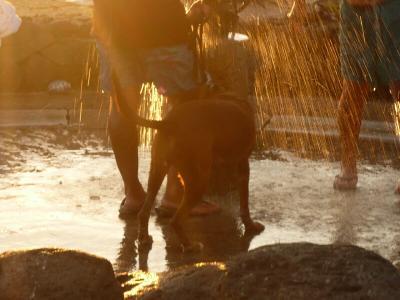 浜辺でシャワーを浴びる犬