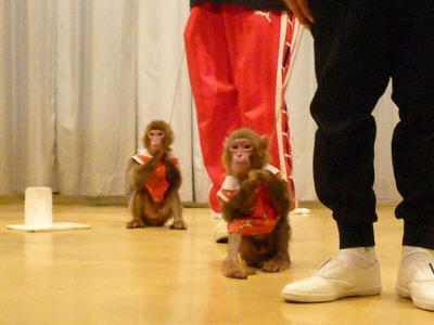 16 猿軍団